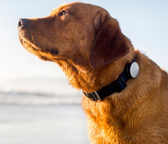 The best pet wearables: Trackers and GPS collars for dogs, cats and more