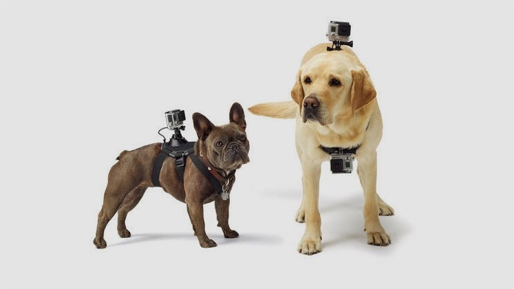 GoPro Fetch for dogs