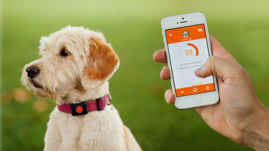 The Best Pet Trackers Gps And Smart Collars For Dogs And Cats