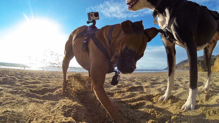 Walkies! GoPro for dogs is awesome