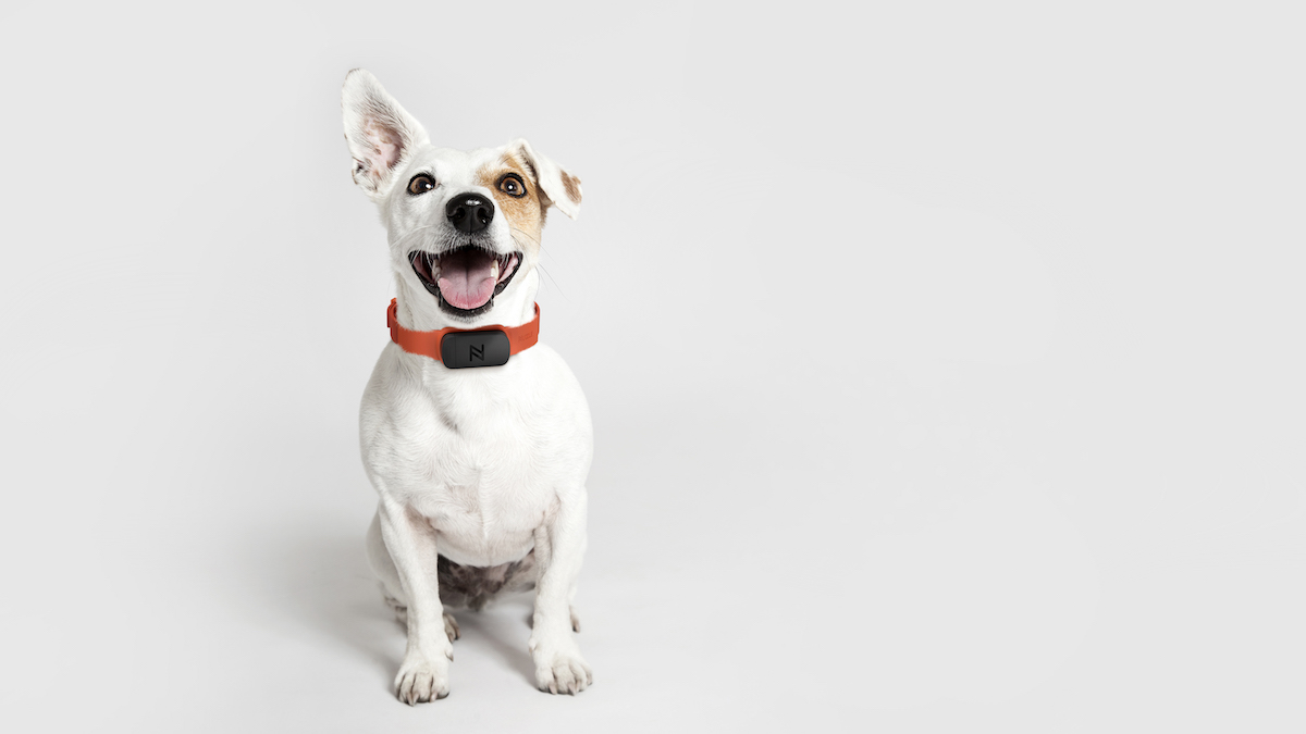 Nuzzle GPS collar tracks your pet