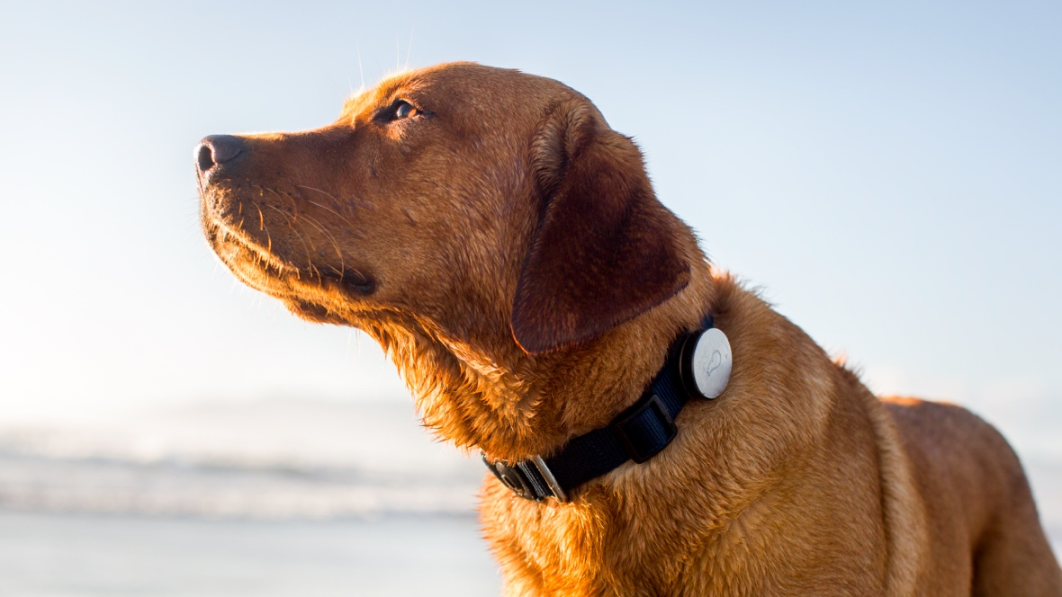 Best dog GPS trackers, pet activity monitors and tracking