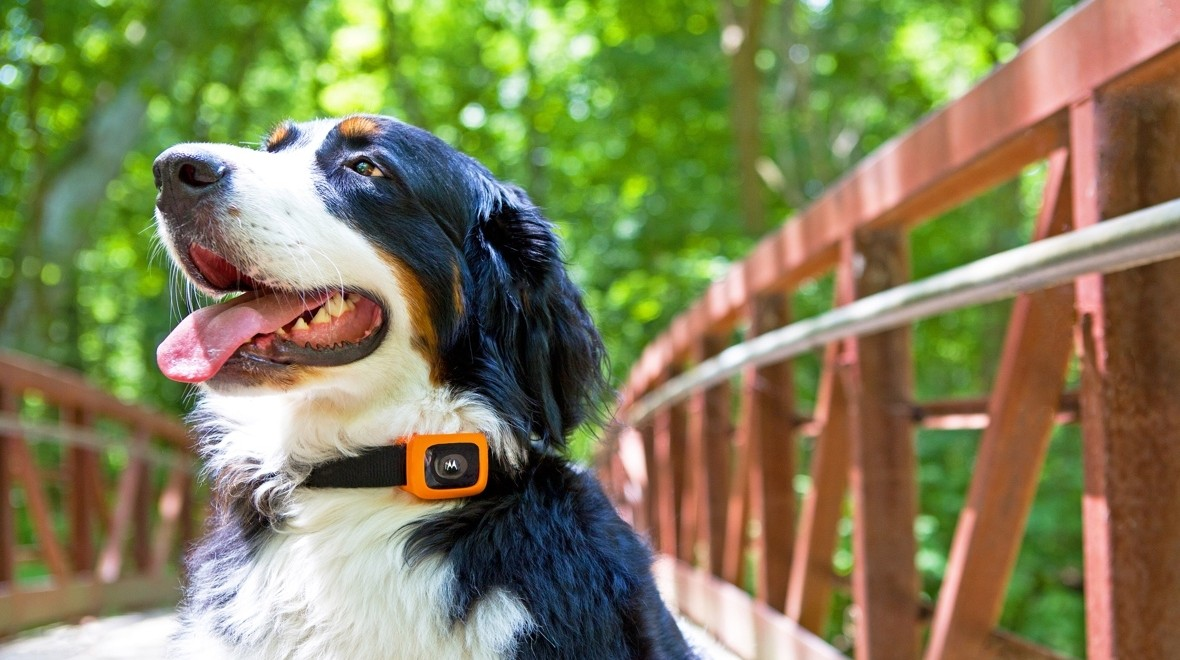 Motorola unveils tracker for your dog