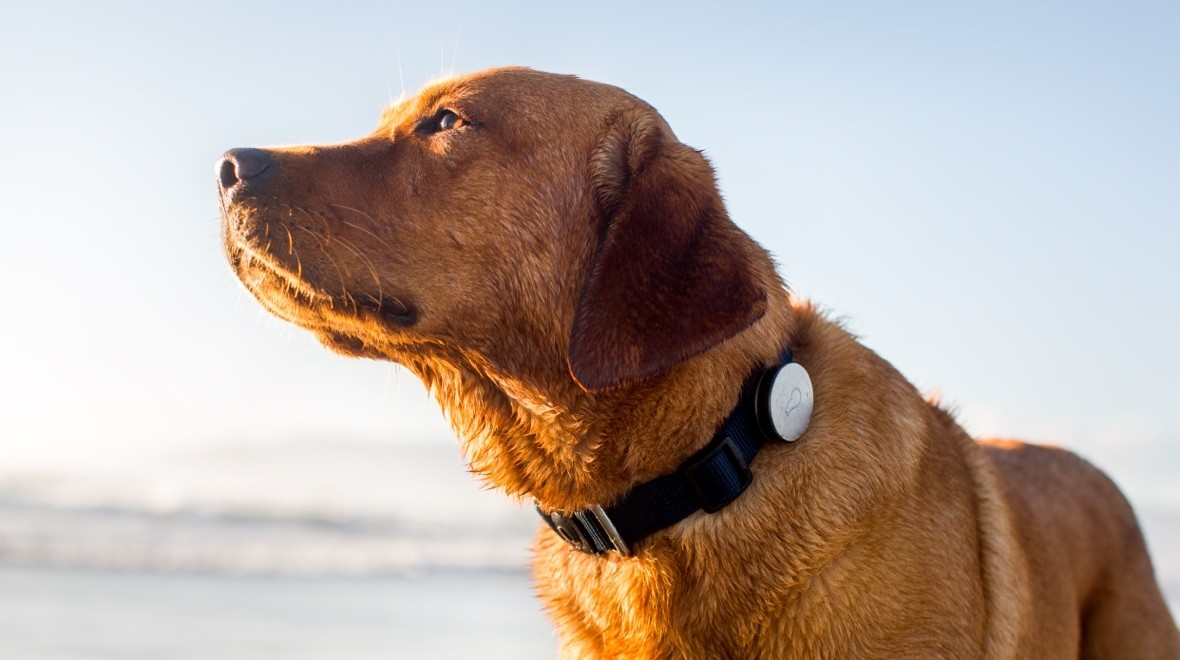 Best pet trackers and smart collars