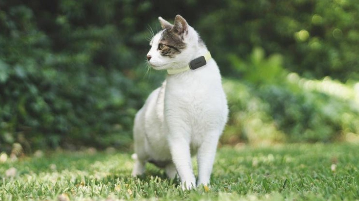 Invoxia's pet tracker for cats and dogs