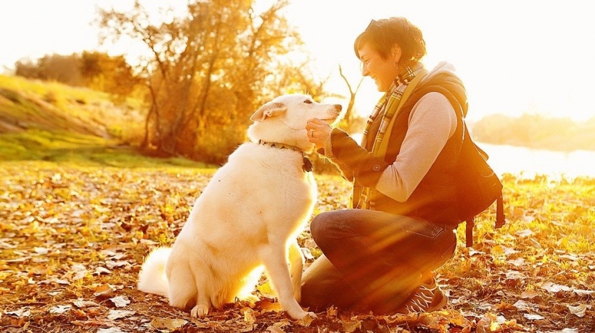 TailTalk translates your dog's wags