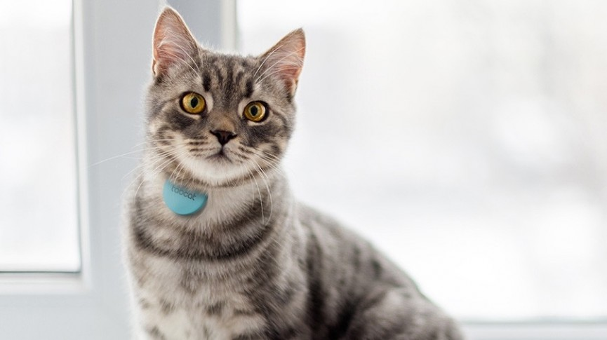 Where Your Cat Goes May Blow Your Mind | National ...