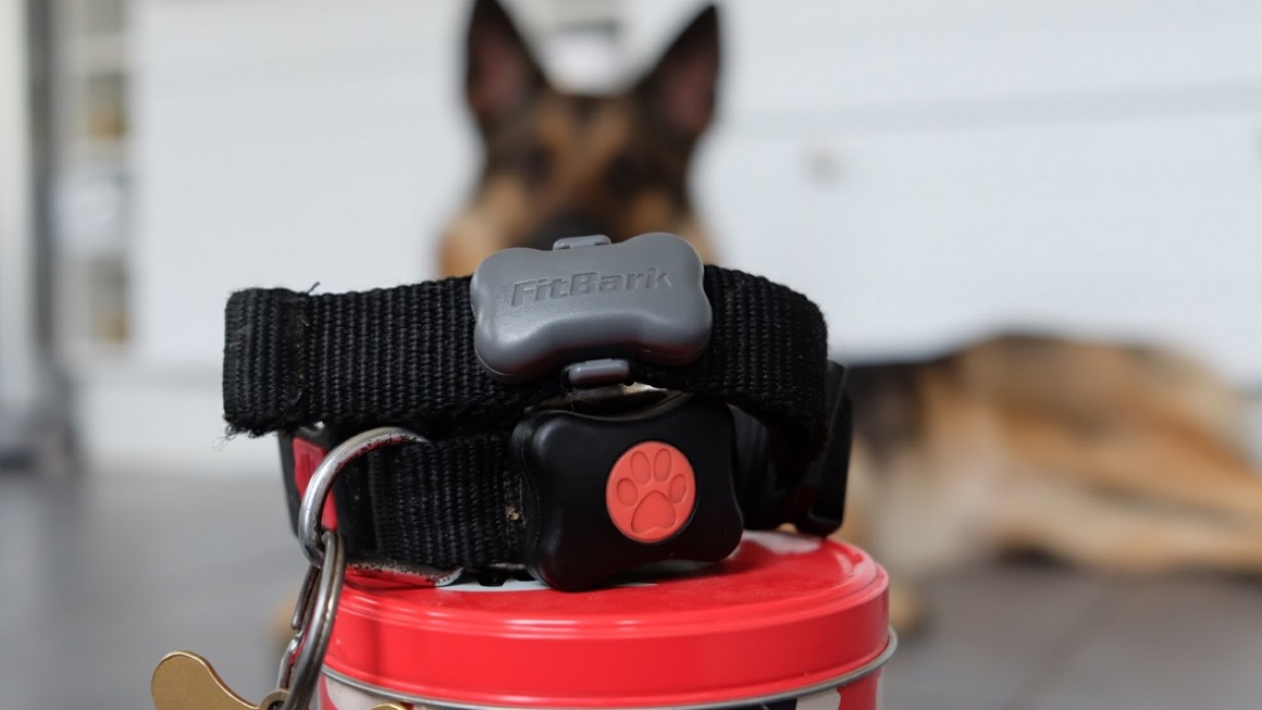 Luke's pet wearable diary - top trot tracking or barking up the wrong tree?