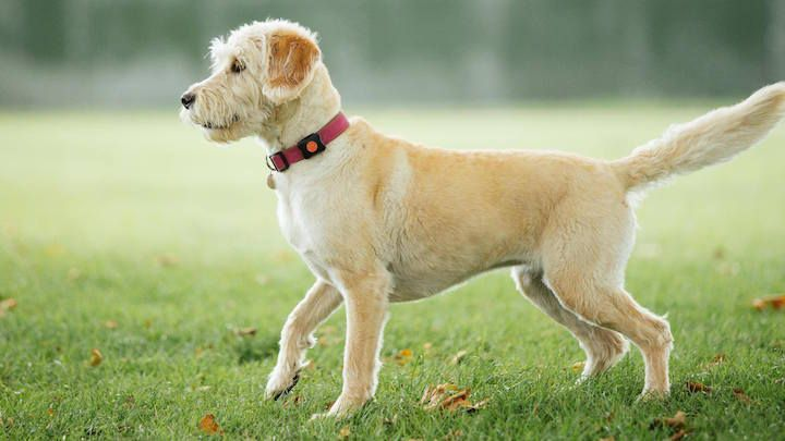 The best pet trackers: GPS and smart collars for dogs and cats