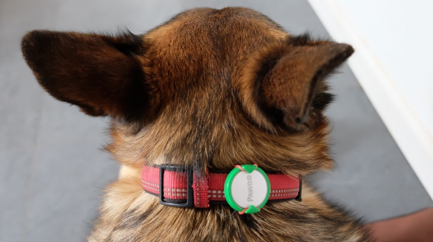 Best dog GPS trackers, pet activity monitors and tracking collars